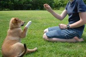 Puppy Training: Do You Have The Heart To Discipline Your Puppy?