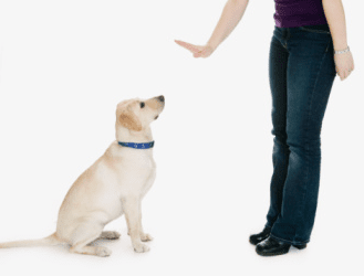 Become A Guide Dog Trainer Uk