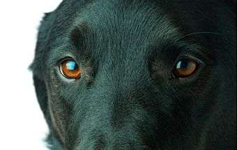 Eye problems in dogs
