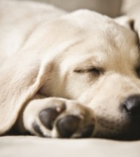 canine parasites all year round problem