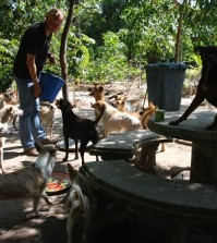 AVFT - Feeding street dogs at the temple
